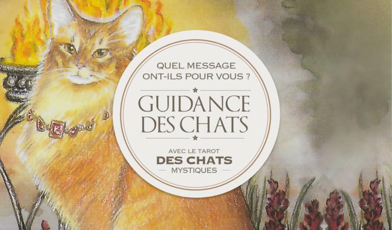 Votre guidance des Chats : Quel message ont-ils pour vous ?