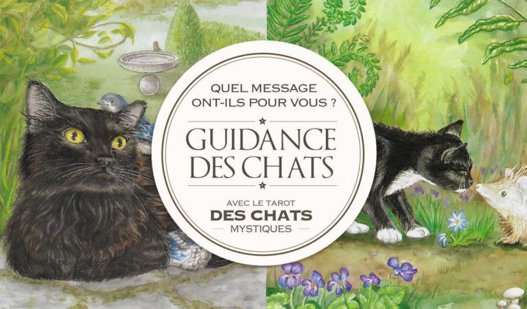 Messages des Chats Mystiques : quelle sera votre guidance ?